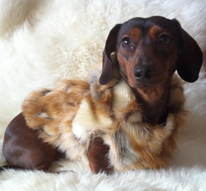 Одежда для собак из натурального меха