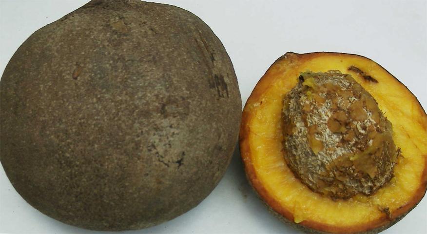 Американский абрикос
