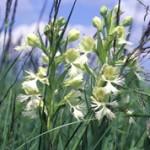 ТОП 10 вымирающих видов растений