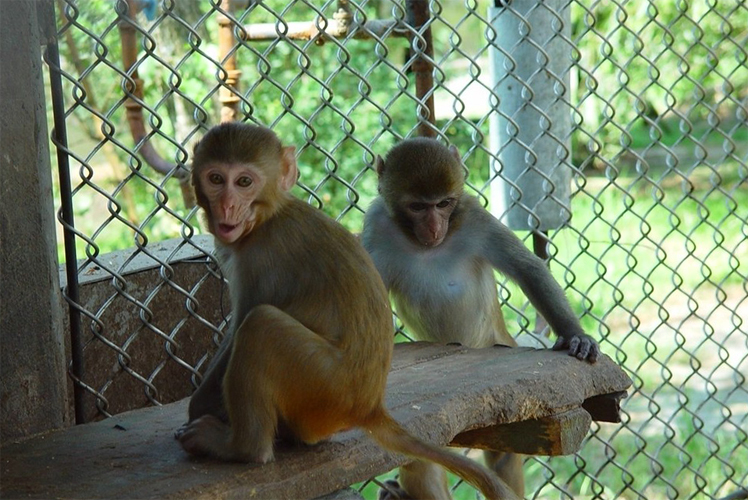 Питомник с обезьянами