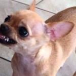 Топ 10 самых злых пород собак в мире