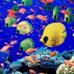 Самые интересные факты про рыб