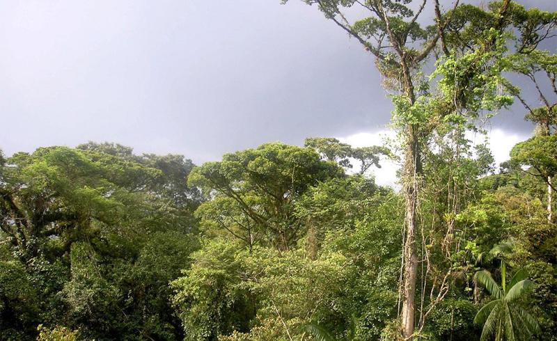 Экваториальные леса Южной Америки