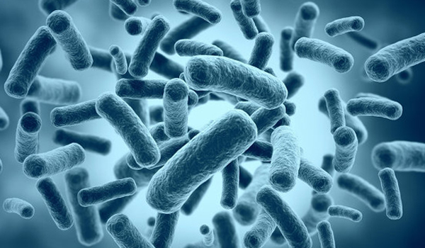 Бактерии в оргнизме