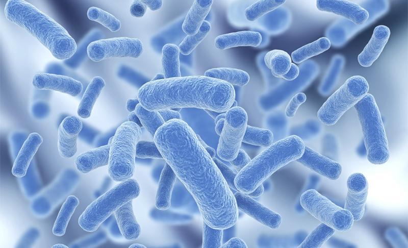 Много бактерий