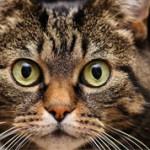 Самые интересные факты о домашних животных