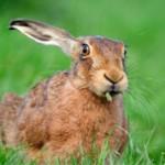 Интересные факты о зайцах (с фото)