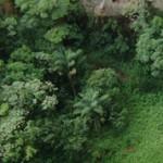 Экваториальные леса Южной Америки: интересные факты и фото
