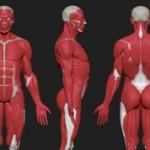 Самые интересные факты о мышцах человека