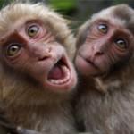 Интересные факты об обезьянах