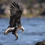 Интересные факты из жизни орлов