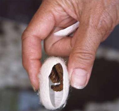 Личинка и гусеница