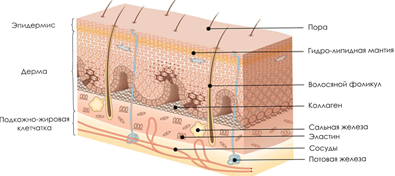 Параметры толщин и веса кожи. - Блог кожа StitchCraft