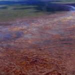 Васюганские болота: интересные сведения и факты