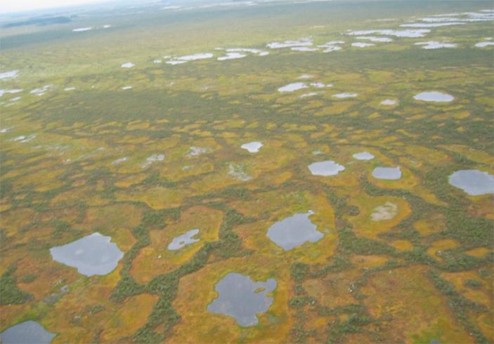 Огромные болота