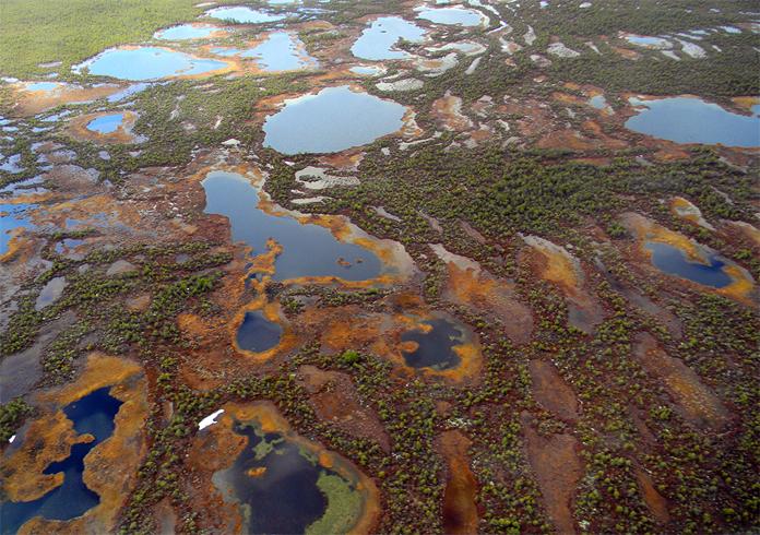 Васюганские болота с высоты птичьего полета