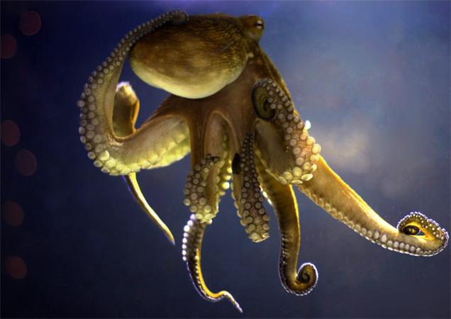 Осьминог под водой