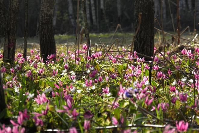Цветы в тайге
