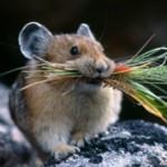 Интересные данные и факты о мышах