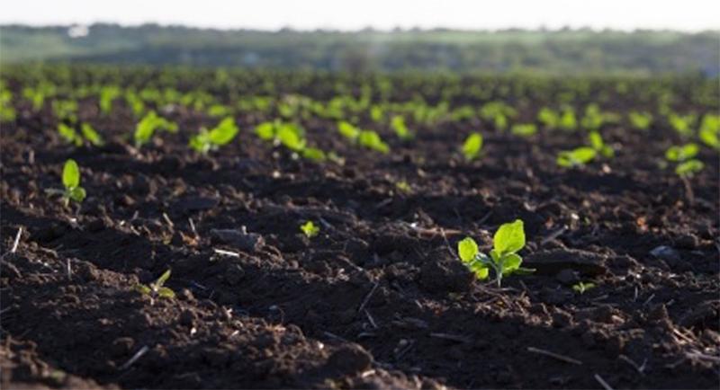 Почва с растениями