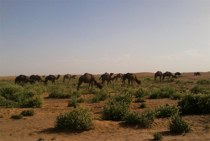 В Сахаре