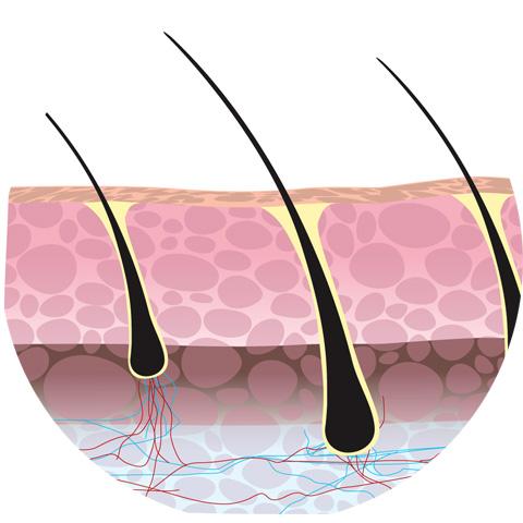 Как устроены волосы