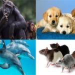 Топ-10 самых умных в мире животных (с фото)