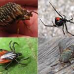 Топ-10 самых противных насекомых