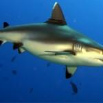 Подборка интересных фактов про акул