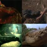 Лучшие фильмы про крокодилов: обзор и описание