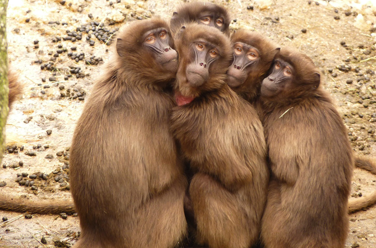 Красивые обезьянки