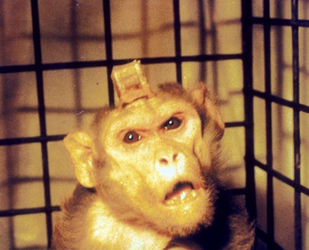 Эксперимент над обезьяной