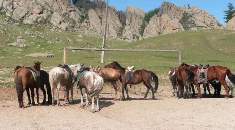Лошади Монголии