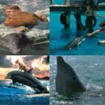 Лучшие фильмы про дельфинов: список и описание