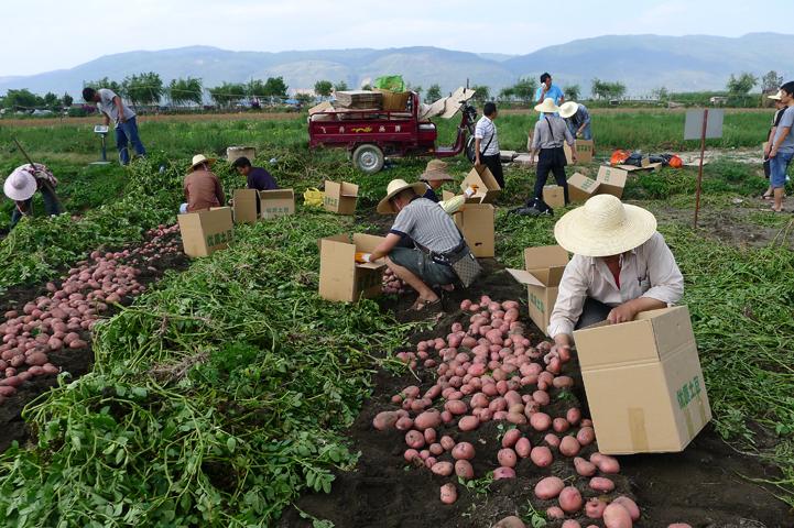 Картошка в Китае