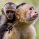 Интересные данные и факты про приматов