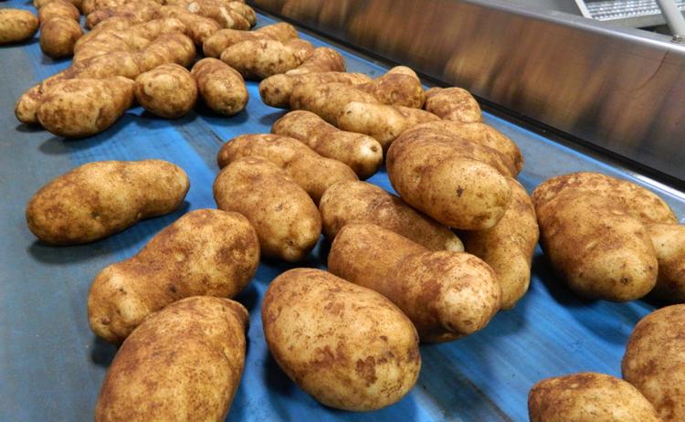 Картошка в США