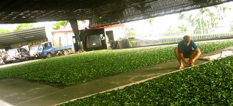 Чай в Тайване