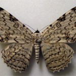 10 самых больших в мире бабочек