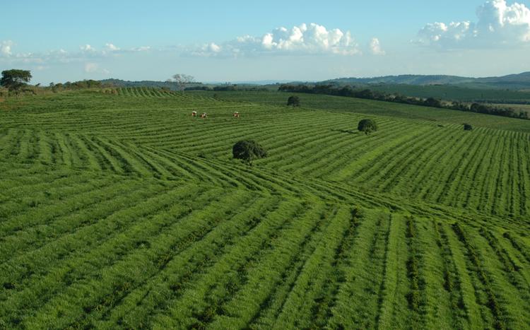 Кофейные поля Бразилии
