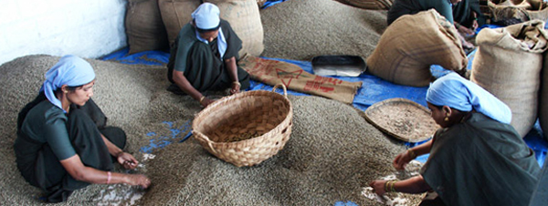 Кофе в Индии