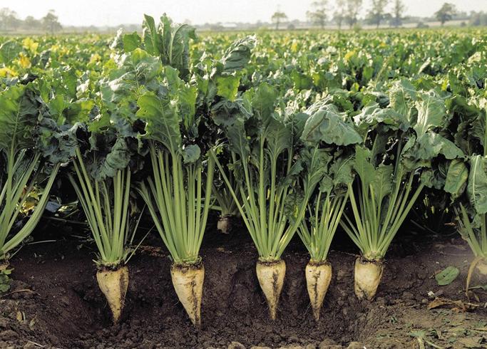 Выращивание на Украине