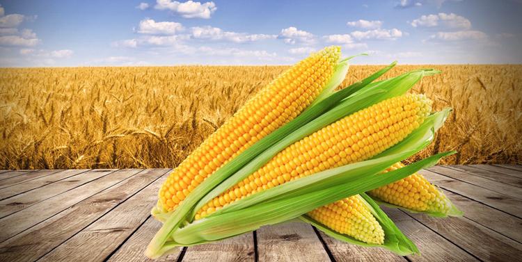 Американская кукуруза