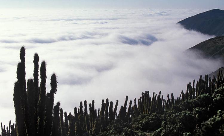 Туман в пустыне Атакама