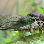 Топ-10 насекомых-вредителей