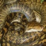 Самые большие в мире змеи