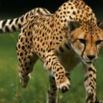 ТОП-10 самых быстрых животных