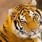 Топ 10 самых красивых животных в мире (с фото)