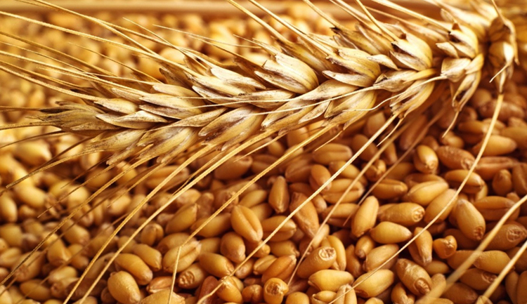 Пшено и пшеница