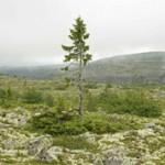 ТОП-10 растений долгожителей